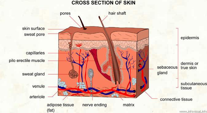 Gudi Skin Care Clinic