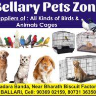BELLARY PETS ZONE